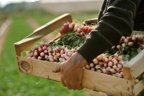 Lauksaimniecības uzņēmumi aicina darbā